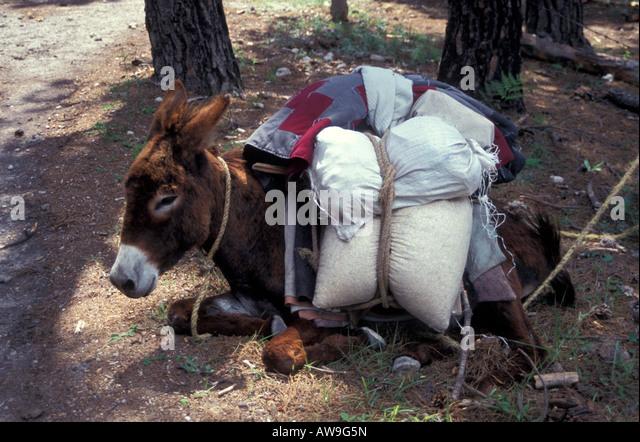 loaded-burro-taking-a-siesta-copper-cany
