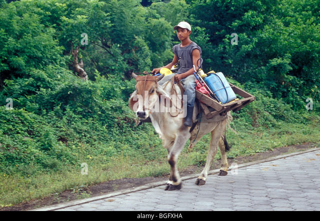 agricultural-worker-riding-a-domesticate