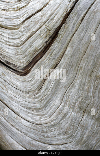 flow-patterns-in-a-piece-of-driftwood-F2