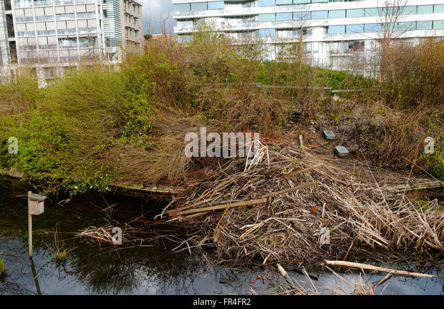 beaver-dam-in-hinge-park-or-olympic-vill