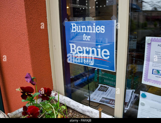 bunnies-for-bernie-a-campaign-sign-for-b
