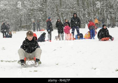 """Box, Wiltshire, UK. 1. Feb. Kinder Rodeln die schneebedeckten Hänge der """"Gemeinsamen in fallenden Schnee. Credit: Nick Upton/Alamy Leben Nachrichten. Stockbild"""