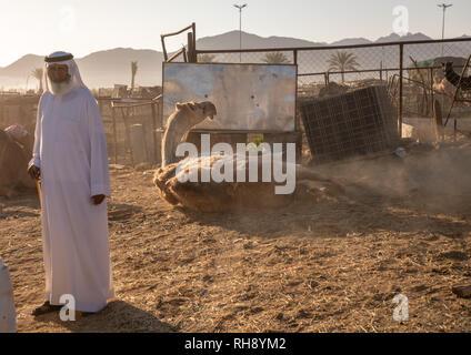Saudische Männer in der Kamelmarkt, Najran Provinz Najran, Saudi-Arabien Stockbild