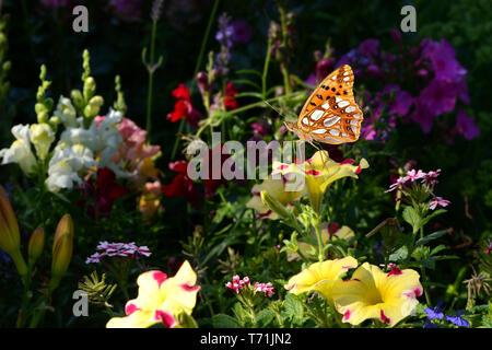 Schmetterling 463 Stockbild