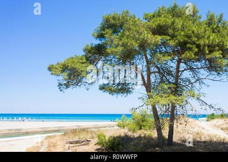 Alimini Grande, Apulien, Italien - eine Tanne am Strand von Alimini Grande Stockbild