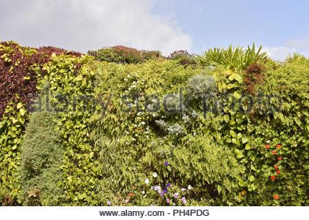 Living Wall, grüne vertikale Garten Fassade mit Pflanzen, Santa Cruz de Tenerife Kanarische Inseln Spanien. Stockbild