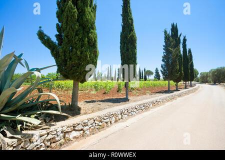 Santa Cesarea Terme, Apulien, Italien - Auf der Landstraße in Richtung Santa Cesarea Terme Stockbild