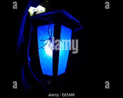 Nahaufnahme der Spinne auf beleuchtete Lampe in der Nacht Stockbild