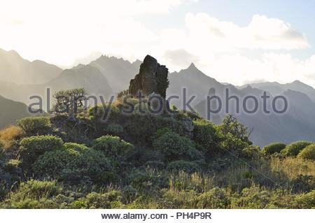 Zerklüftete Vulkanlandschaft mit sukkulenten Pflanzen, Anagagebirge in der Nähe von Almaciga, im Nordosten von Teneriffa Kanarische Inseln Spanien. Stockbild
