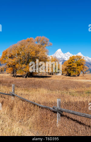 John Moulton historische Scheune, Mormone Zeile, Grand-Teton-Nationalpark, Wyoming, USA Stockbild