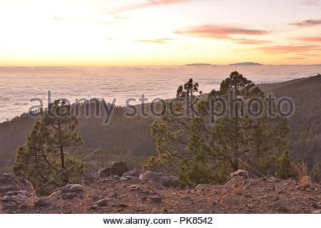 Naturpark Corona Forestal, Kiefern (Pinus canariensis) in Höhe von Teneriffa Kanarische Inseln Spanien wachsen. Blick über den Wolken in der Abenddämmerung. Stockbild