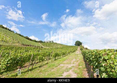 Dresden - Deutschland - Weinbau, Europa Stockbild