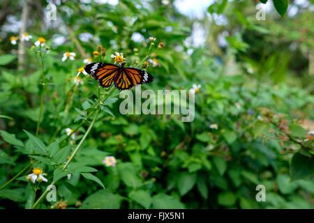 Schmetterling auf Blumen blühen im Garten Stockbild