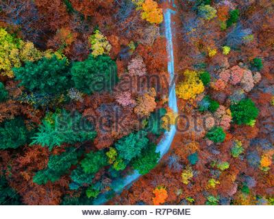 Frankreich, Drome, Saou Wald Stockbild