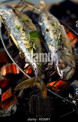 Gegrillte Makrele (Thema: Provence) Stockbild
