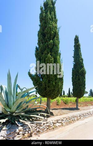 Santa Cesarea Terme, Apulien, Italien - einen Kaktus und eine Zypresse neben dem Land straße Stockbild