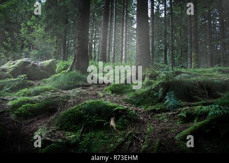 Bemoosten grünen Wald, Low Angle View, Bariloche, Rio Negro, Argentinien Stockbild