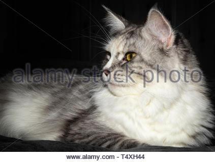 Katze etwas zu sehen Stockbild