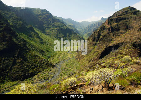 Barranco de Santiago, La Gomera, Kanarische Inseln, Spanien, Europa Stockbild