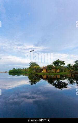Fliegender Vogel, See Marawila, Sri Lanka, Asien Stockbild