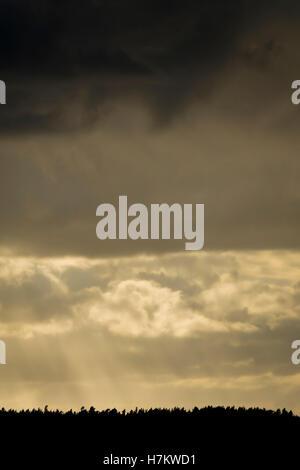 Silhouette von Wald und dramatischen Himmel. Wolken mit Sonnenstrahlen. Dunkle und launische Natur Hintergrund. Stockbild