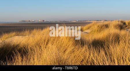 Frankreich, Somme, Bucht von Authie, Mers, die Dünen von Marquenterre, südlich von der Bucht von Authie, Berck-sur-Mer im Hintergrund Stockbild