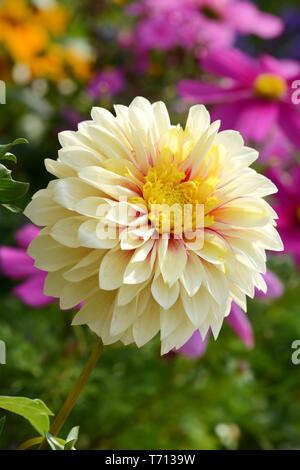 Blumen 260 Stockbild