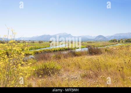 Alcudia, Mallorca, Spanien - blühende Landschaft von Mallorca vor einigen beeindruckenden Berge im Hinterland Stockbild