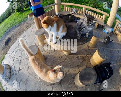 High Angle View Of Cats und persönlich im Pavillon Stockbild