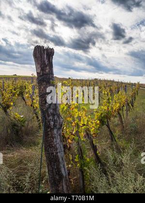Herbstlichen Weinberg Stockbild