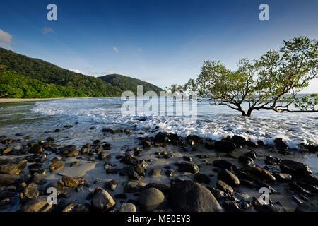 Mangrove Tree und Felsen am Strand mit Surf in Cape Tribulation, Queensland, Australien Stockbild