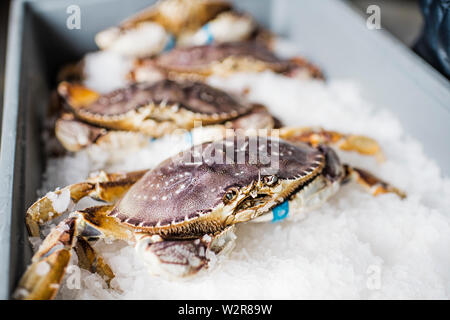 Gruppe von frisch gefangenen Krabben Schalentiere auf Eis zu einem Fischmarkt. Stockbild