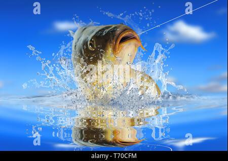 Fische 152 Stockbild