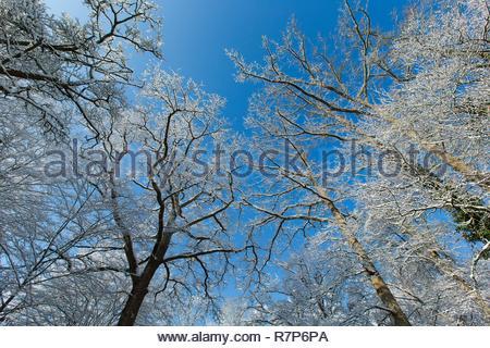 Frankreich, Seine-et-Marne, Bois le Roi, der Wald von Fontainebleau unter dem Schnee Stockbild