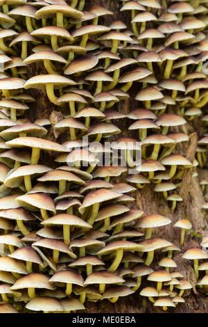 Nahaufnahme der Baum Pilze aus Neuschoenau im Nationalpark Bayerischer Wald in Bayern, Deutschland Stockbild