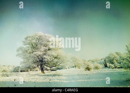 Schnee bedeckte Landschaft Stockbild
