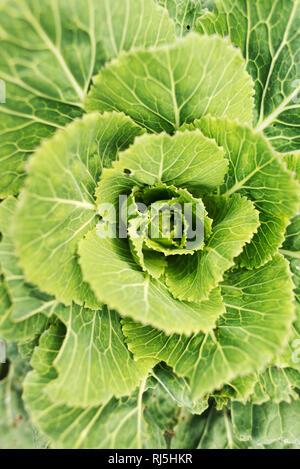 Nahaufnahme der Grünpflanze Stockbild
