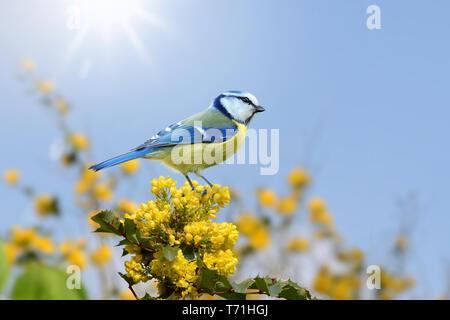 Vögel 97 Stockbild