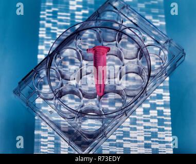 DNA-Probe in Durchstechflasche auf Multi-well Platte, DNA gel zeigen Ergebnisse Stockbild
