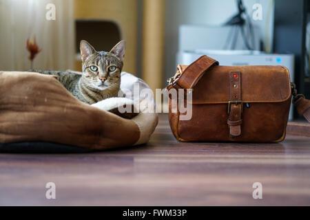 Porträt von Tabby ruhen auf Boden von zu Hause-Tasche aus Leder Stockbild