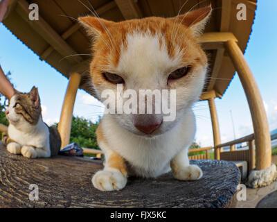 Close-up Portrait von Katze auf hölzernen Sitz im freien Stockbild