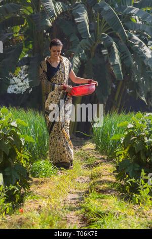 Ländliche Frau wandern in ihrer Landwirtschaft Feld mit einem Kunststoff Gold Pan in der Hand. Stockbild