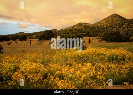 Santa Fe, New Mexico, USA. Frühling Blumen in voller Blüte. Stockbild