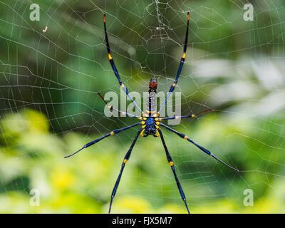 Nahaufnahme von Spider Web Stockbild