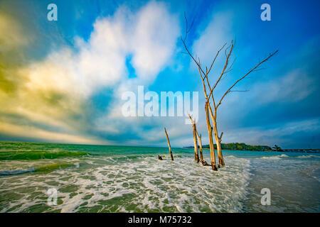 Die Ertrank, Wald, Longboat Key, Florida Guulf von Mexiko Stockbild