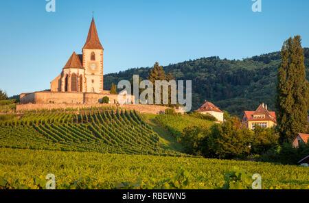 Morgendämmerung auf das 15. Jahrhundert Kirche von St. Jacques, umgeben von den Weinbergen des Grand Cru in Hunawihr, Elsass Frankreich Stockbild
