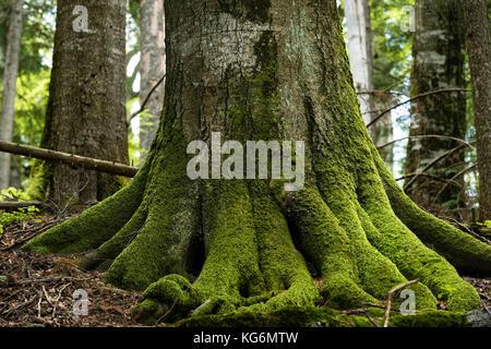 Fagaras Natura 2000, Rumänien - Mai 2016: alten Wald und Protokollierung in den südlichen Karpaten. Stockbild