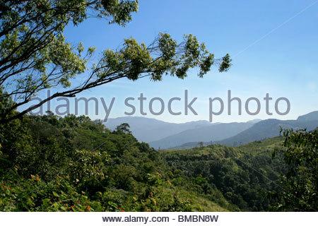 GREEN VALLEY IN PONMUDI, KERALA Stockbild