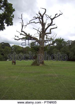 Toter Baum Swan Green New Forest Hampshire England Stockbild