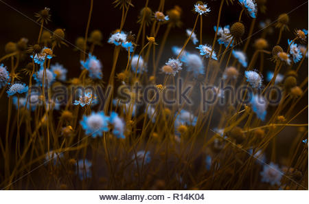 In der Nähe von blühenden Pflanzen in einem Feld Stockbild